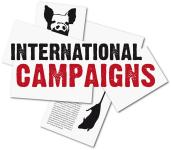 "Logo ""International Campaigns"""